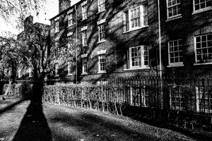 Shadow of tree