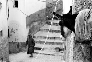 Donkey watching woman