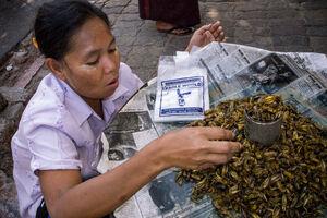 Edible locust