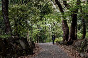Old man taking a walk in Rinshi No Mori Park