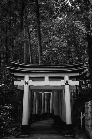 row of torii in the woods