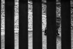 柵の向こうの猫