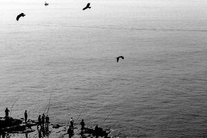 Fisherman and birds in Enoshima