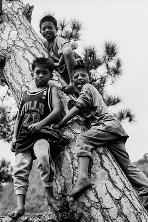 Three boys around tree