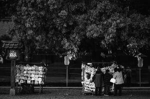 paper fortunes under tree