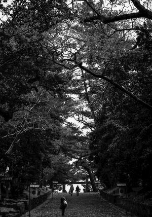 Approach way in Izumo Taisha