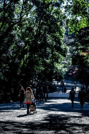 木立の中のベビーカー