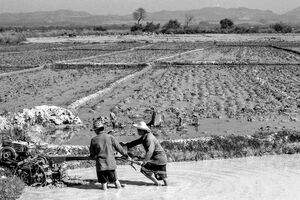Men working in rice paddy