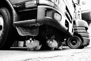 Cat relaxing under truck