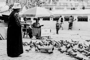 鳩に餌をあげる女性