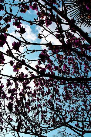 グラバー園で咲いていた木蓮