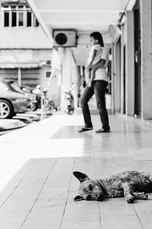 Dog taking a nap on sidewalk