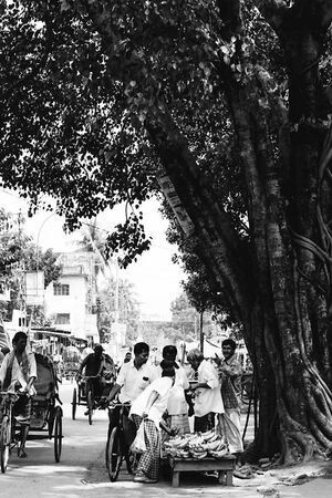 Banana seller in tree shade