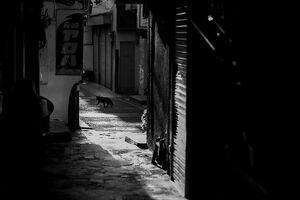 丸山を散歩する黒猫