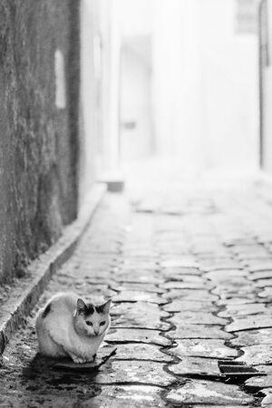 Cat in dim lane