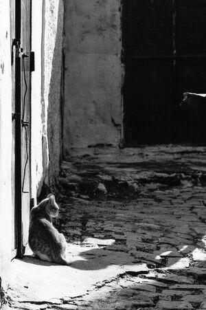 日溜りにお座りする猫