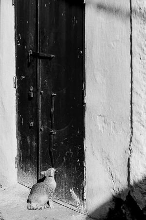 扉の前で見上げる猫