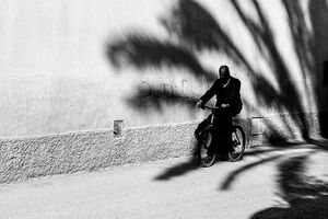 Bicycle running through shadow of palm tree