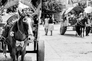 フチタンの道路脇に駐められた馬車