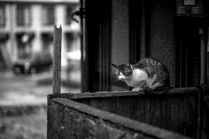 塀の上で寛ぐ猫