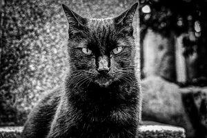お座りして、じっと見据える猫