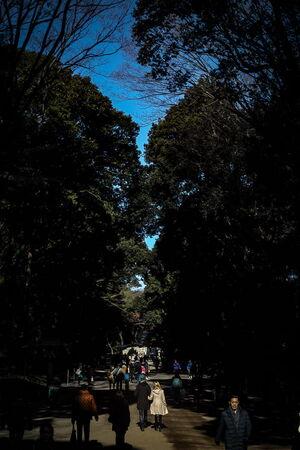 明治神宮の参道を歩く人びと