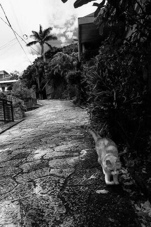 金城町を走る猫