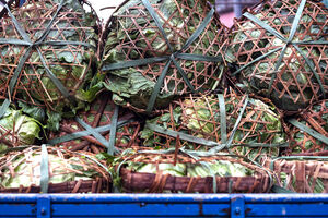 Chinese cabbage on truck