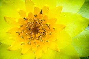 黄色い花のクローズアップ