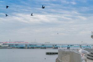 鶴見川河口干潟にいたカモメ