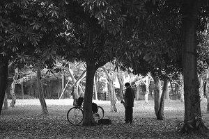 木陰のサックス奏者