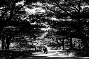 木漏れ日の中を歩くサラリーマン