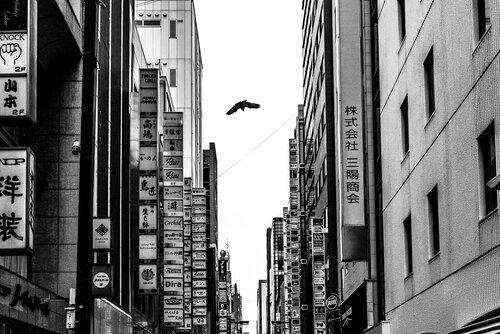 銀座の町を飛ぶカラス