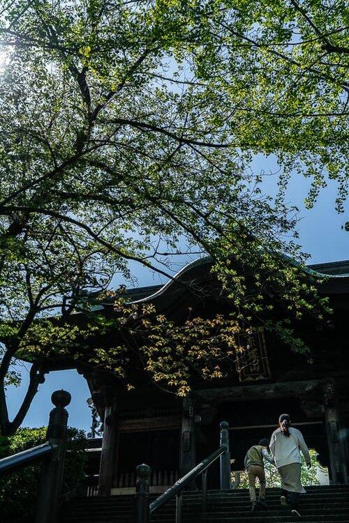 乗蓮寺の山門