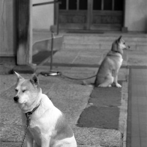 Dogs looking at each direction
