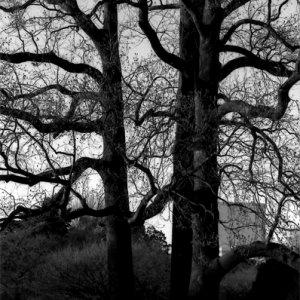 大木の下に佇む女性
