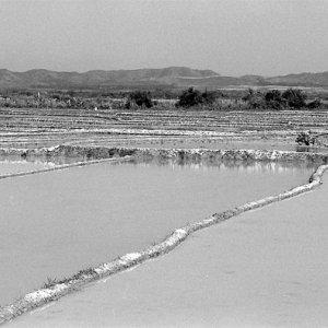 ムアンシン郊外の水の張られた田んぼ