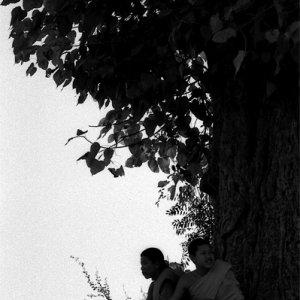 大きな木の根元で休む僧侶