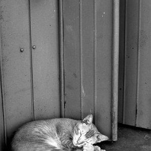 無防備に丸まって寝る猫
