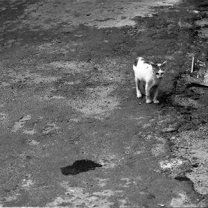 Hiding cat and disclosing cat