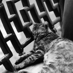 豫園で寝る猫