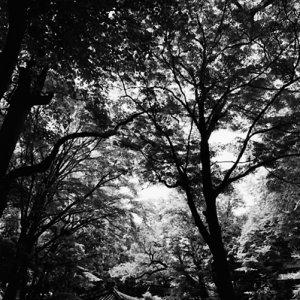 Arbor near pond in Changdeokgung
