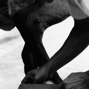 馬の蹄を削る男