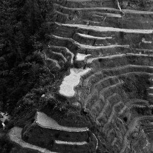Rice paddies on steep slope