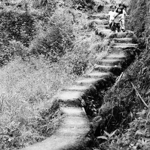 Kids on stairway in rice field
