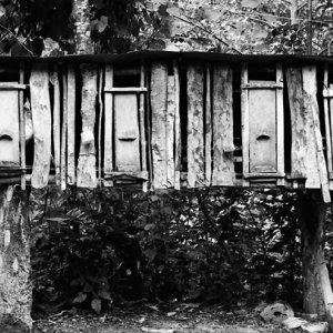タムアンに立っていた鳥小屋