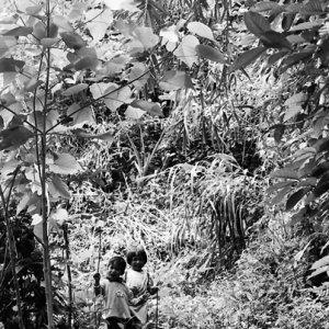 茂みの中からこちらを見る子ども