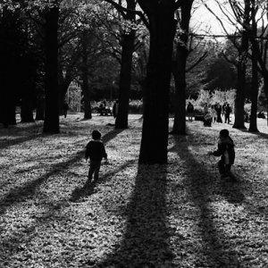 Kids playing around trees