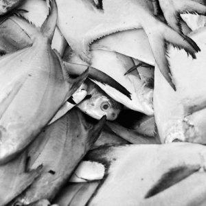 新鮮な魚でいっぱいになっていた容器