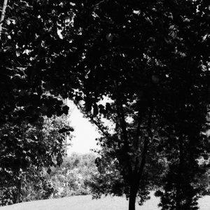 木陰でのんびりする男